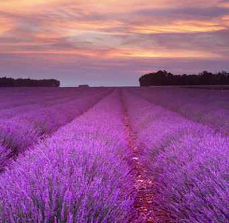 Vacations Magazine: The Palette of Provence