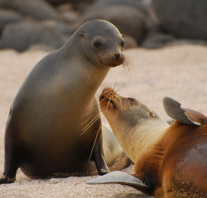 Vacations Magazine: Glorious Galapagos Islands: Part One
