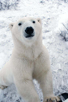 Vacations Magazine: Journey to the Polar Bear Capital