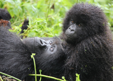 Vacations Magazine: Spend Time with the Mountain Gorillas