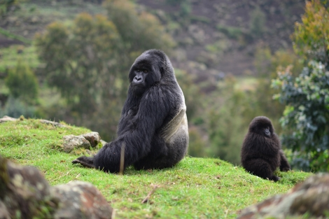 Vacations Magazine: A Celebration of Mountain Gorilla Conservation