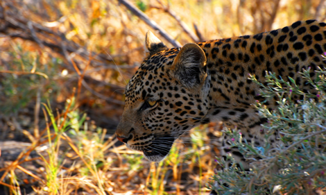 Vacations Magazine: Safari in Southern Africa: Part Two
