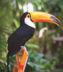 Vacations Magazine: Two Ways to Cruise the Amazon