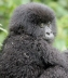 Vacations Magazine: Saving the Gorillas of East Africa