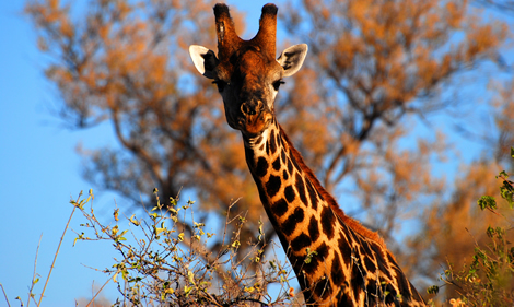 Vacations Magazine: Safari in Southern Africa: Part One